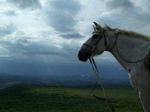 Летопись конного похода 2015 года